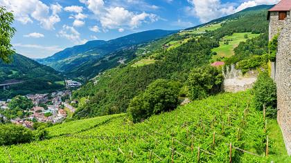 Festival du vin blanc - cover