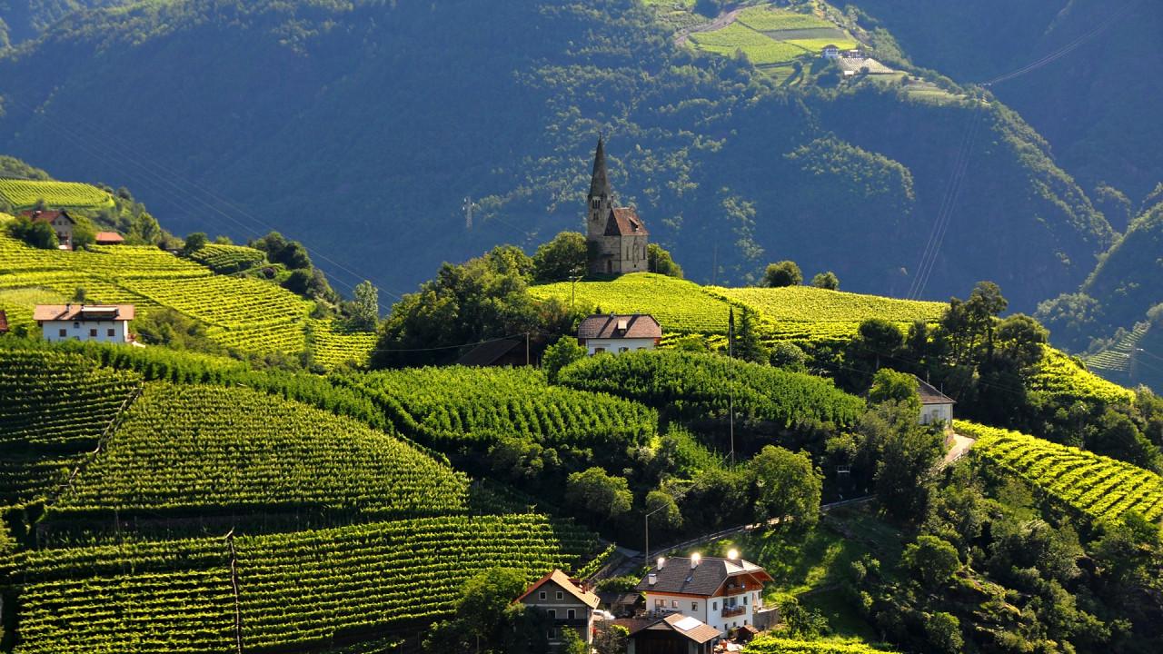 Vineyards Bolzano