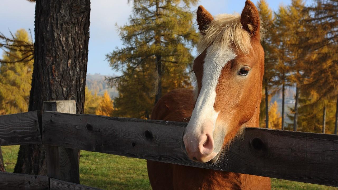 Aveglinese horse