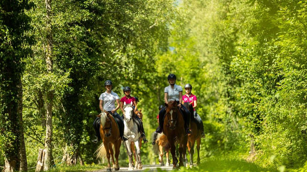 Offre équitation